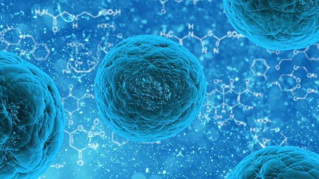 間葉系幹細胞